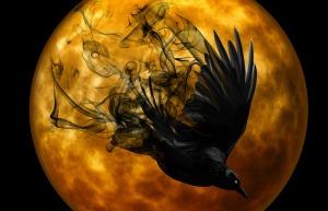 raven-988221_1280