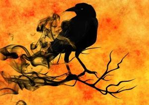 raven-988229_1920